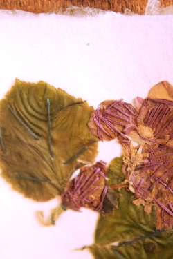 Sewn Flower Book Detail